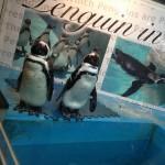 池袋で超人気の『ペンギンのいるBAR』に突入してきました!ペンギンバーで餌やりは出来るの!?【レポート記事】