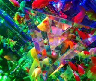アートアクアリウム2015の東京の混雑状況はどうだった?狙い目はいつ!?