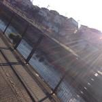 朝の散歩は本当に効果があるの!?早歩き散歩スタートして気付いた、人生レベルで大切な5つの事!!【実践レポート記事】